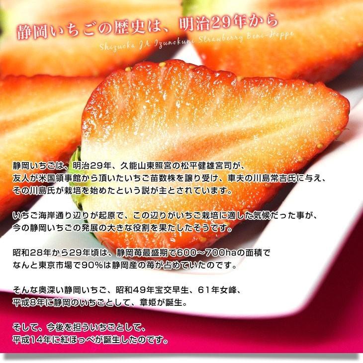 静岡県より産地直送 JA伊豆の国 紅ほっぺ DX 約560g (280g×2P) 送料無料 いちご イチゴ 苺 ※クール便発送|sanchokudayori|05
