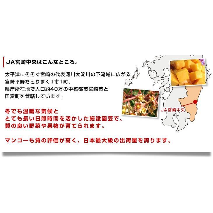 宮崎県より産地直送 JA宮崎中央 太陽のタマゴ 最高級AA品 5Lサイズ (650g以上×1玉) 送料無料 マンゴー たいようのたまご|sanchokudayori|05
