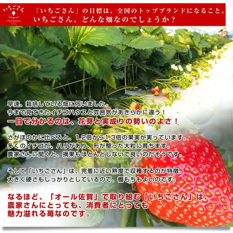 送料無料 佐賀県より産地直送 JAからつ 新品種いちご いちごさん DX 450g 15粒から18粒 苺専用箱ゆりカーゴ入り イチゴサン 唐津 うまかもん sanchokudayori 06