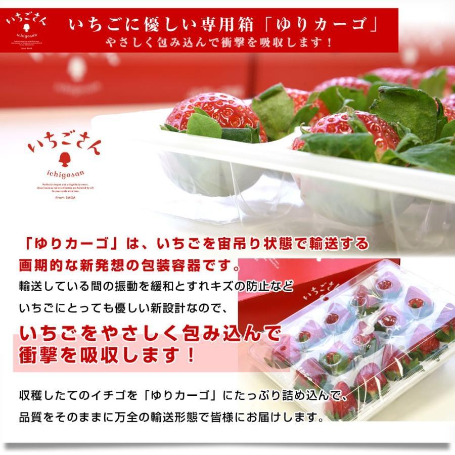 送料無料 佐賀県より産地直送 JAからつ 新品種いちご いちごさん DX 450g 15粒から18粒 苺専用箱ゆりカーゴ入り イチゴサン 唐津 うまかもん sanchokudayori 08