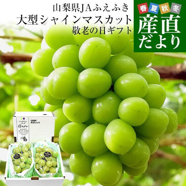 山梨県または長野県産 シャインマスカット1.2キロ(2房から3房)送料無料 ぶどう 葡萄 種無し 皮ごと食べれるぶどう sanchokudayori