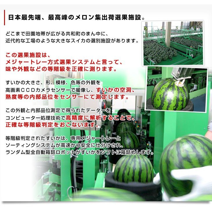 北海道より産地直送 JAきょうわ らいでんスイカ 超特大 優品5Lサイズ 10キロ以上 すいか 西瓜 送料無料 sanchokudayori 06