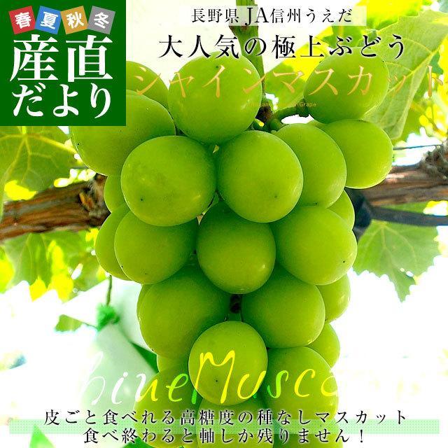 長野県産 シャインマスカット 合計1.2キロ(2房から3房) ぶどう 葡萄 JA中野市 JA信州うえだ JAながの 送料無料 sanchokudayori