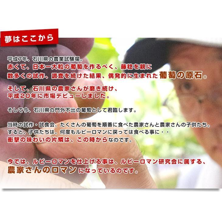 石川県産 JA全農いしかわ ルビーロマン 秀品1房 500g以上 化粧箱入り 葡萄 ぶどう 送料無料 市場スポット ※クール便 sanchokudayori 05