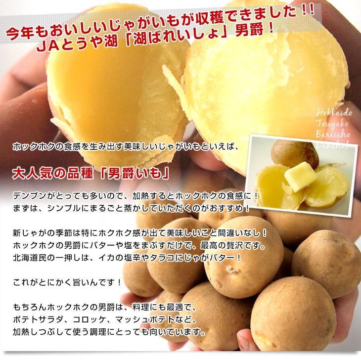 北海道より産地直送 JAとうや湖 じゃがいも 湖ばれいしょ「男爵」 Mサイズ 10キロ 馬鈴薯 ジャガイモ 送料無料|sanchokudayori|03