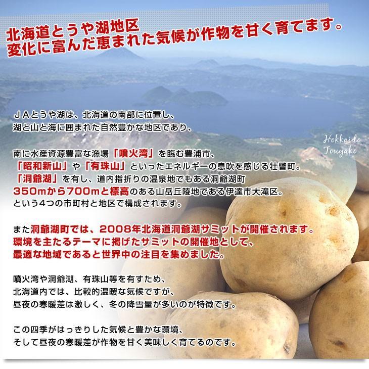 北海道より産地直送 JAとうや湖 じゃがいも 湖ばれいしょ「男爵」 Mサイズ 10キロ 馬鈴薯 ジャガイモ 送料無料|sanchokudayori|04
