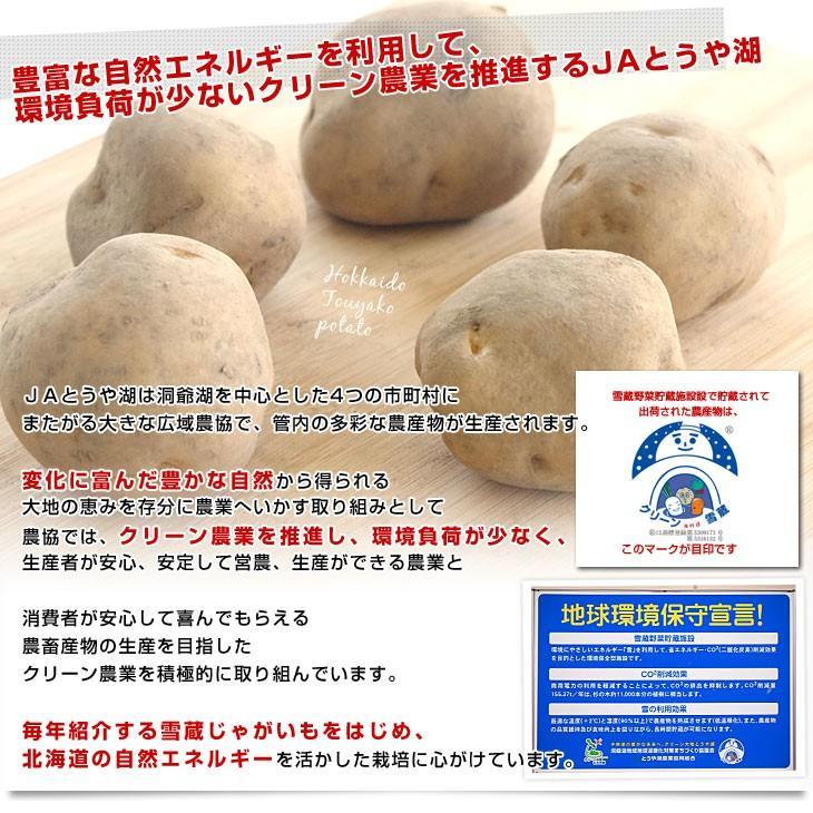 北海道より産地直送 JAとうや湖 じゃがいも 湖ばれいしょ「男爵」 Mサイズ 10キロ 馬鈴薯 ジャガイモ 送料無料|sanchokudayori|05