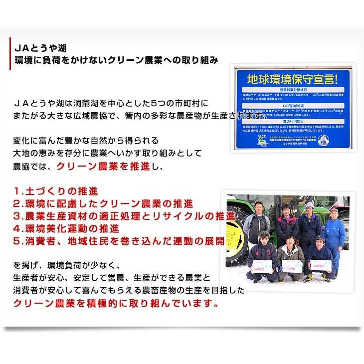 北海道から産地直送 JAとうや湖 じゃがいも 湖ばれいしょ「とうや」 Mサイズ 10キロ 馬鈴薯 ジャガイモ 送料無料|sanchokudayori|04