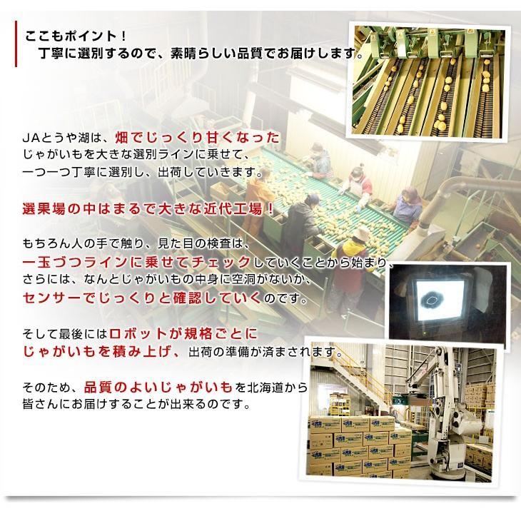 北海道から産地直送 JAとうや湖 じゃがいも 湖ばれいしょ「とうや」 Mサイズ 10キロ 馬鈴薯 ジャガイモ 送料無料|sanchokudayori|05