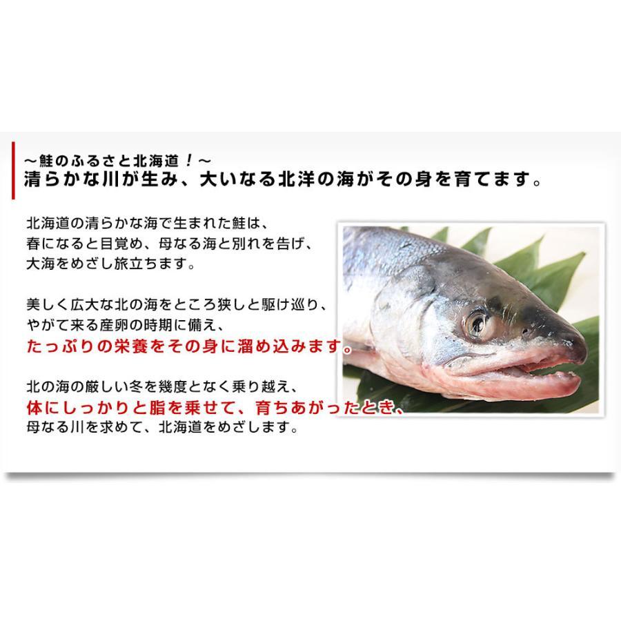 北海道産 姿切り身 大型の鮭 まるごと1尾分 3キロ 北海道サケ シャケ 秋鮭|sanchokudayori|05