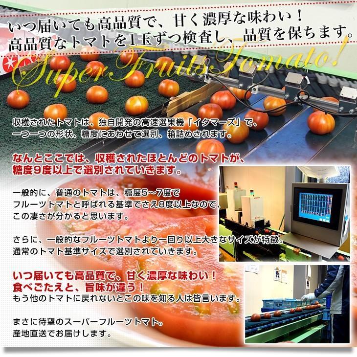 茨城県より産地直送 NKKアグリドリーム スーパーフルーツトマト 9度+ A品 約1キロ(8玉から16玉)  送料無料 高糖度トマト NKKトマト|sanchokudayori|06