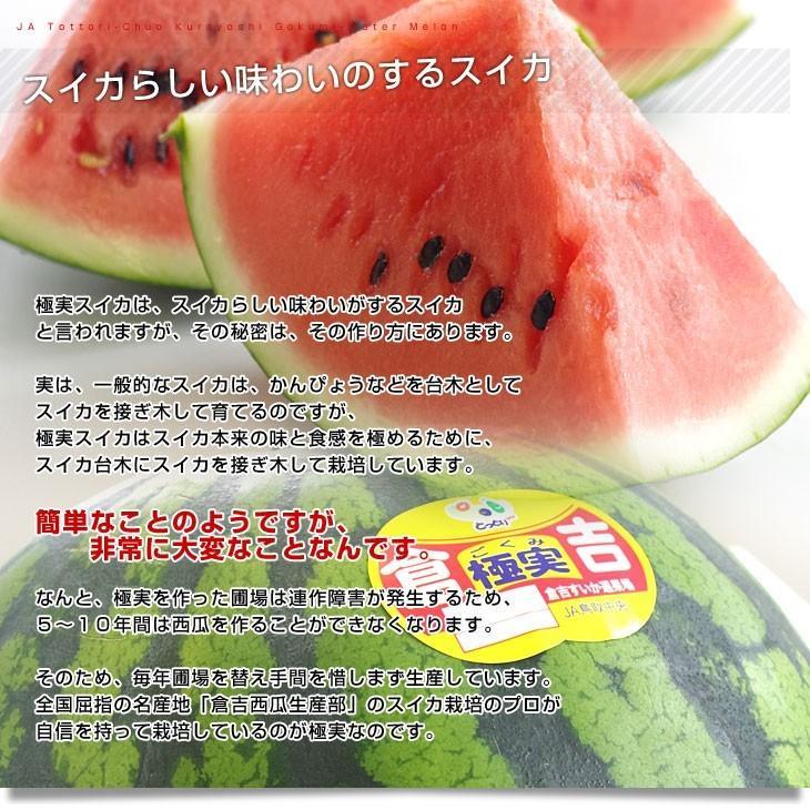 鳥取県より産地直送 JA鳥取中央 倉吉スイカ 極実(ごくみ) 秀品 3L以上の大玉 8キロ以上 送料無料 西瓜 すいか|sanchokudayori|04