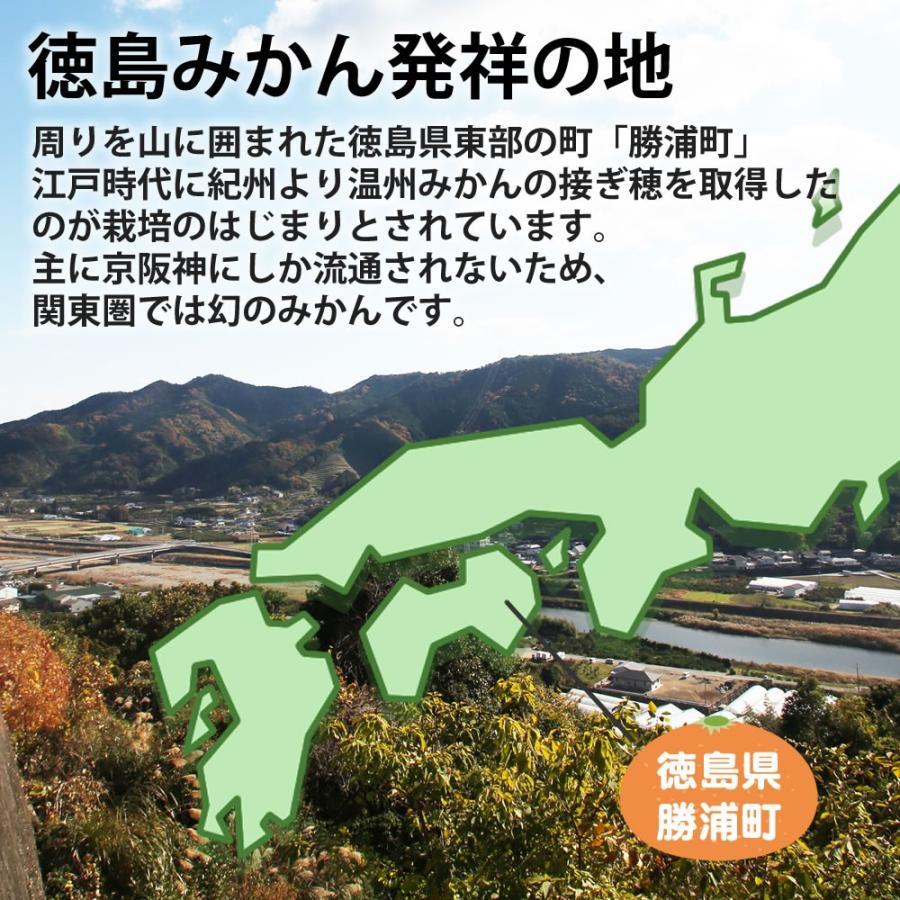 徳島 市 てる 大島