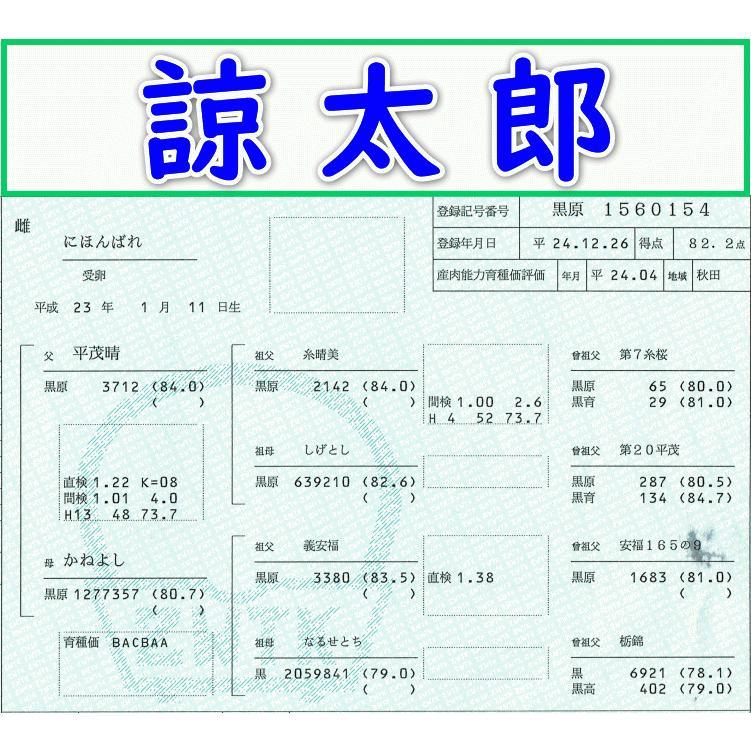 【諒太郎】にほんばれ 平茂晴-義安福-栃錦 (22008250Q)体外受精卵