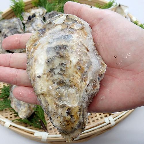 牡蠣 殻付き 兵庫県産 10個  父の日 プレゼント 60代 70代 80代|seafoodhonpo88|06
