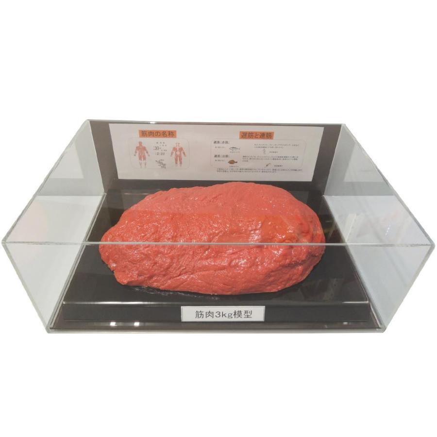 筋肉模型フィギュアケース入 3kg IP-988(A&B)(送料込み)