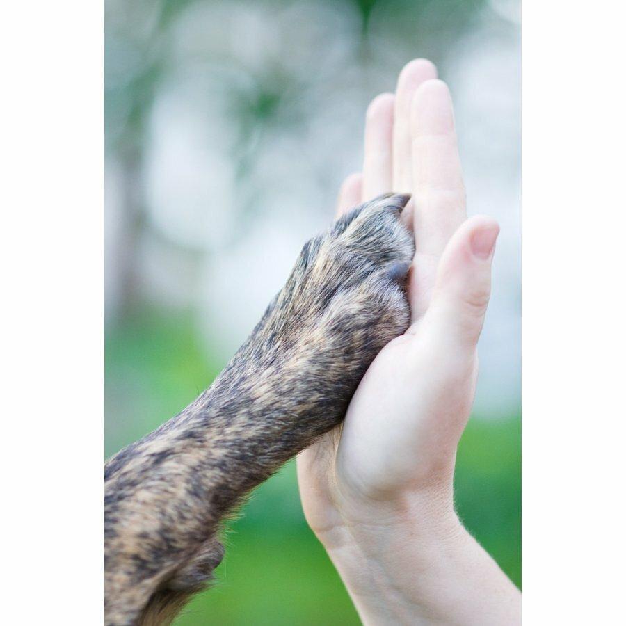 犬 猫 爪切り ネイルトリマー 安全ギロチンタイプ 日本ブランド Odd eye 爪やすり付き 獣医師トリマー愛用 清潔 水洗い可!PayPayポイント消化|sefety-shop|10