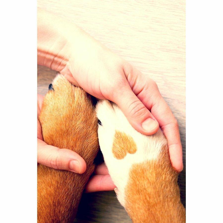犬 猫 電動爪切り Nail Grinder ネイルグラインダー Odd eye ホワイト 3つの専用ポート付属 USB高速充電式 静音モーター採用 小型犬〜大型犬対応 sefety-shop 13