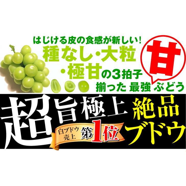 ぶどう 山梨産 シャインマスカット 約2kg 1組 ぶどう 国華園 seikaokoku 02