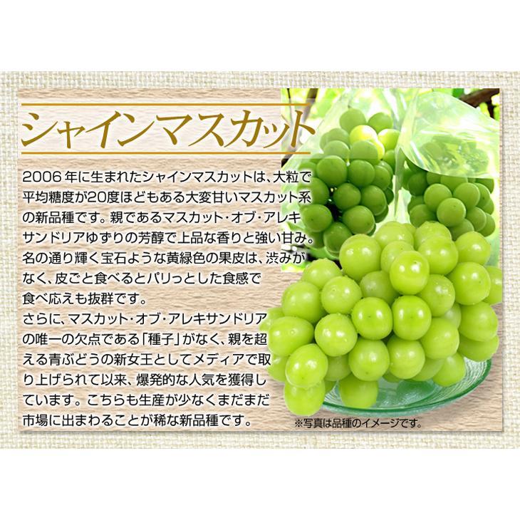 ぶどう 山梨産 シャインマスカット 約2kg 1組 ぶどう 国華園 seikaokoku 07