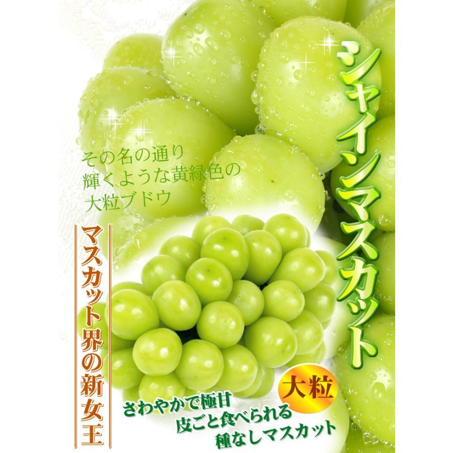 ぶどう 山梨産 シャインマスカット 約2kg 1組 ぶどう 国華園 seikaokoku 09