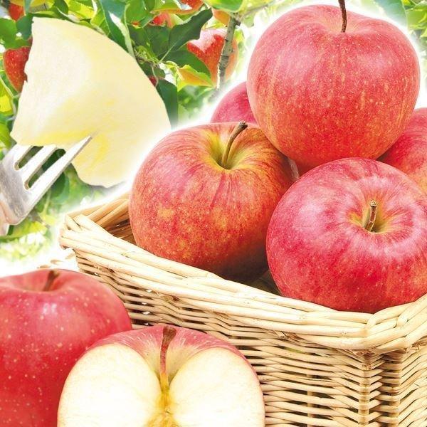 りんご 山形産 みちのくふじ 10kg  国華園 りんご リンゴ サンふじ|seikaokoku|02