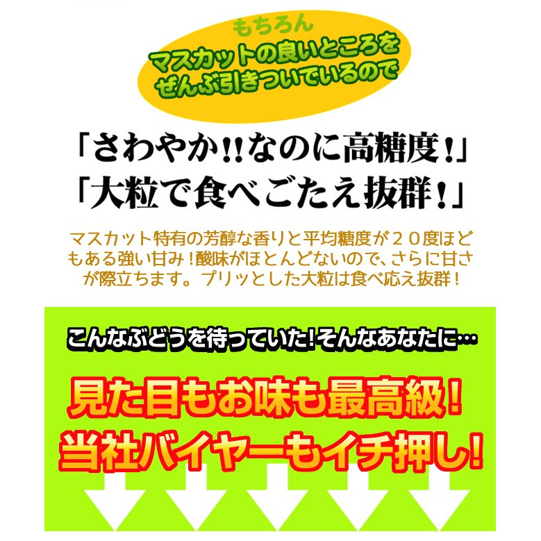 ぶどう 山梨産 シャインマスカット 2房 ご家庭用 seikaokoku 09