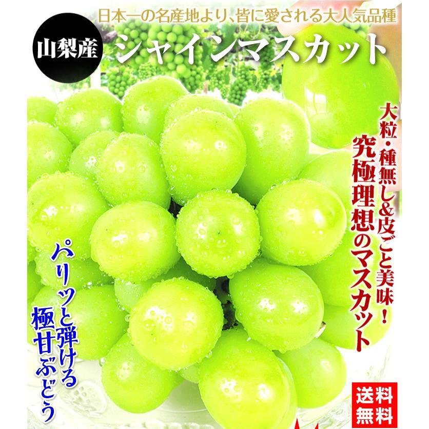 ぶどう 山梨産 シャインマスカット 2房 ご家庭用 seikaokoku 02