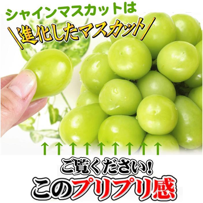 ぶどう 山梨産 シャインマスカット 2房 ご家庭用 seikaokoku 05