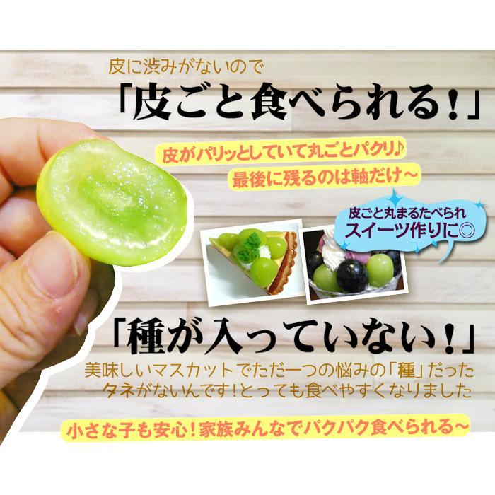 ぶどう 山梨産 シャインマスカット 2房 ご家庭用 seikaokoku 06