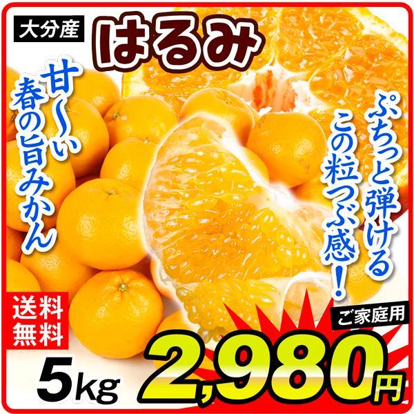 みかん 大分産 訳あり はるみ 5kg 1箱 送料無料 食品 国華園 seikaokoku