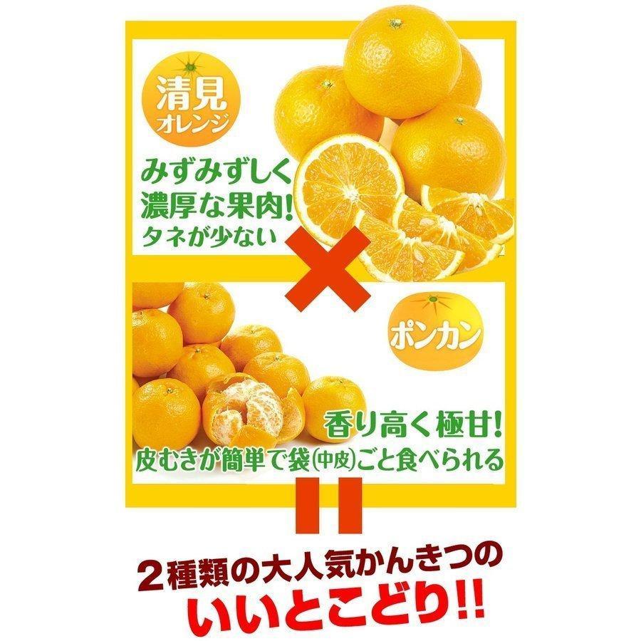 みかん 大分産 訳あり はるみ 5kg 1箱 送料無料 食品 国華園 seikaokoku 04