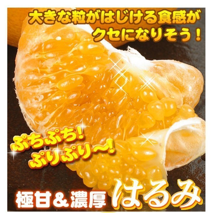 みかん 大分産 訳あり はるみ 5kg 1箱 送料無料 食品 国華園 seikaokoku 05