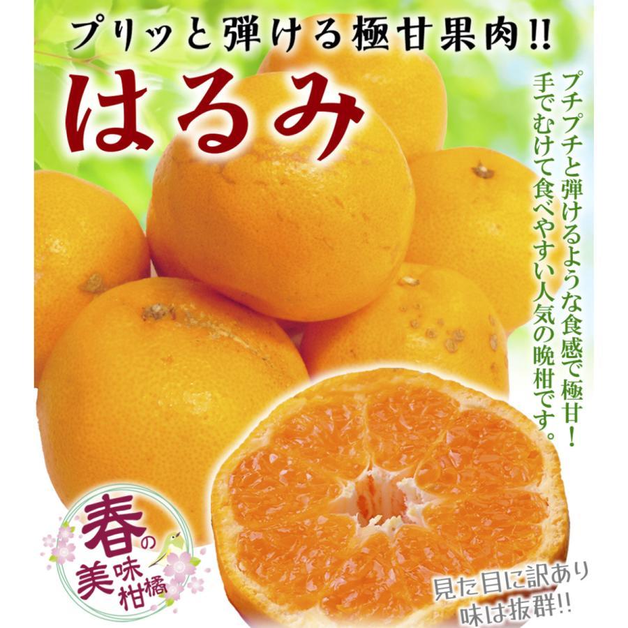 みかん 大分産 訳あり はるみ 5kg 1箱 送料無料 食品 国華園 seikaokoku 02