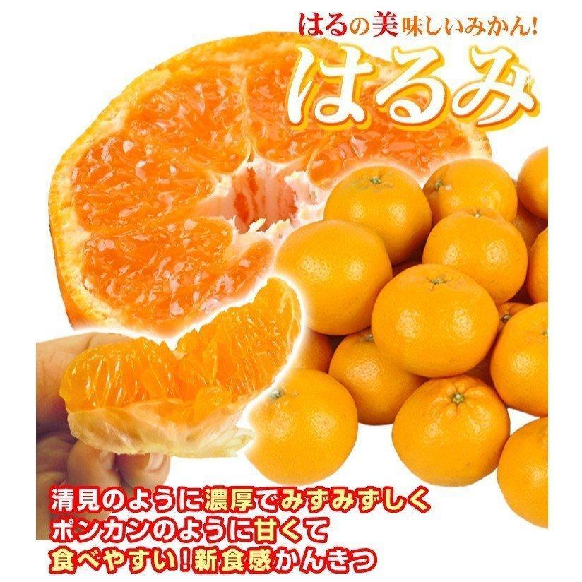 みかん 大分産 訳あり はるみ 5kg 1箱 送料無料 食品 国華園 seikaokoku 03