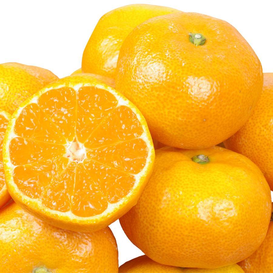 みかん ご家庭用 熊本産みかん(10kg)【10月中旬より発送開始】 蜜柑 柑橘 フルーツ 果物 食品 国華園|seikaokoku|10