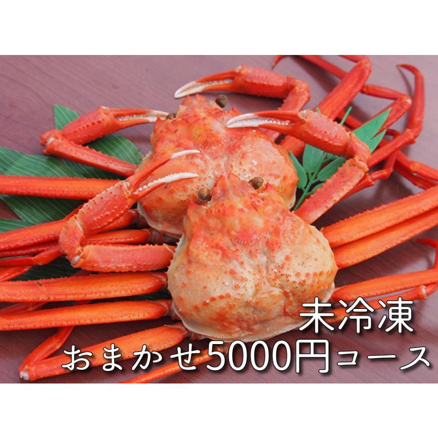 【日時指定不可】未冷凍おまかせ5000円コース|seimon