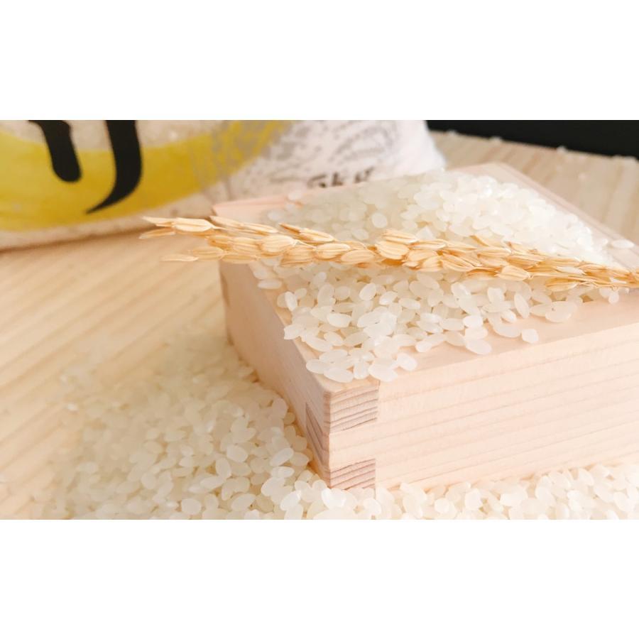 お米 10kg(5kg×2) 新潟県産コシヒカリ 令和2年産|senda|03