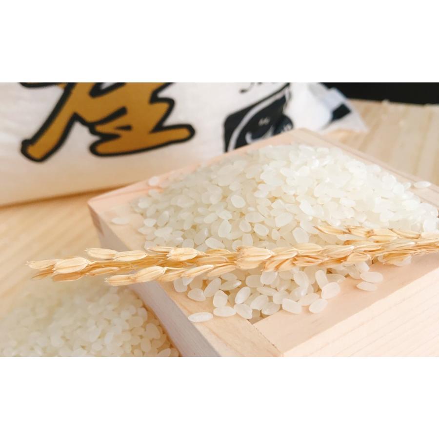 お米 10kg(5kg×2) 新潟県魚沼産コシヒカリ 令和2年産|senda|03