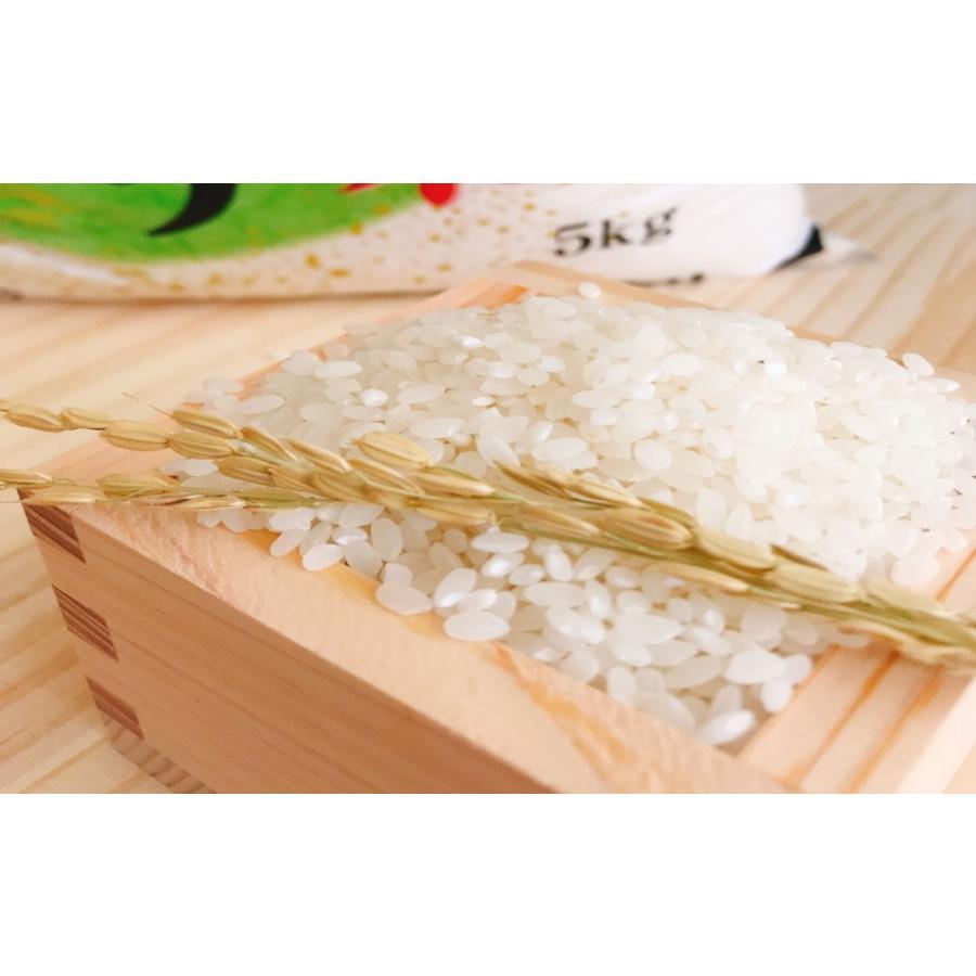 お米 BG無洗米 10kg(5kg×2) 茨城県産コシヒカリ 令和2年産|senda|04