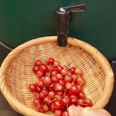 ハーコスター 雨水タンク 227リットル「レイントラップ(雨どい集水器)」「 専用スタンド」「オーバーフローキット」セット|sessuimura|09