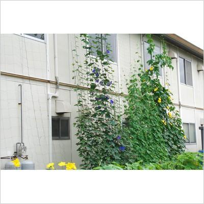 【水耕栽培キット】  ホームハイポニカ 303 おまけ付き 果菜・葉菜両用 冬は葉菜の栽培がオススメ sessuimura 05