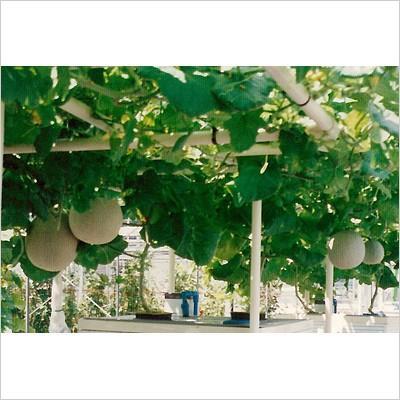 【水耕栽培キット】  ホームハイポニカ303 補水器セット おまけ付き 本格的に栽培したい方向け|sessuimura|02