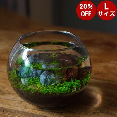 【水栽培】 育てる水草 Lサイズ レイアウト 可能 アクアリウム 水槽 テラリウム 室内 栽培 キット セット 苔|sessuimura