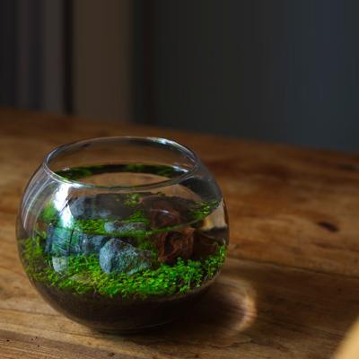 【水栽培】 育てる水草 Lサイズ レイアウト 可能 アクアリウム 水槽 テラリウム 室内 栽培 キット セット 苔|sessuimura|05