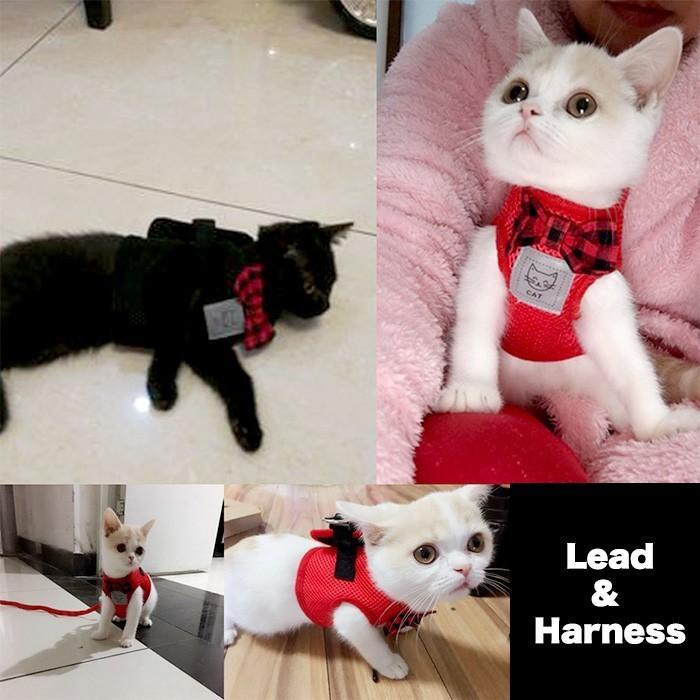 猫 犬 ハーネス リード ペット メッシュ 服  ウェアハーネス 胴輪 キャット ドッグ リーシュ リボン|sevenbridge|05