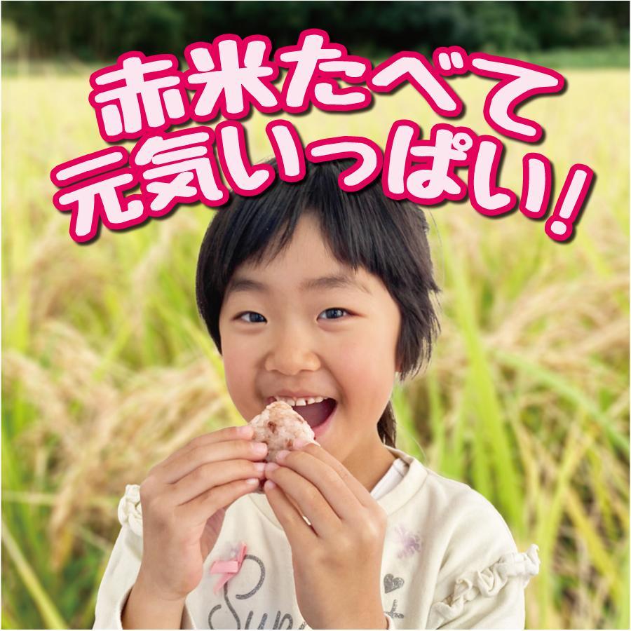 滋賀県東近江市蒲生野産 克勝あかね赤米 - 250g(真空パック)|shigahochi