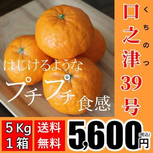 【送料無料】口之津39号(5kg×1箱) shige-mikan