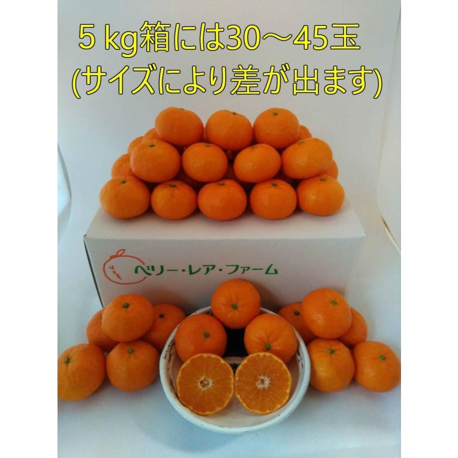 【送料無料】口之津39号(5kg×1箱) shige-mikan 07