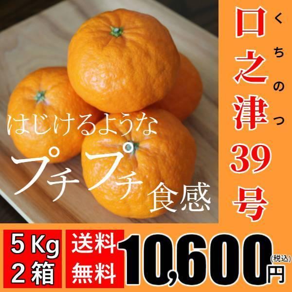 【送料無料】口之津39号(5kg×2箱) shige-mikan